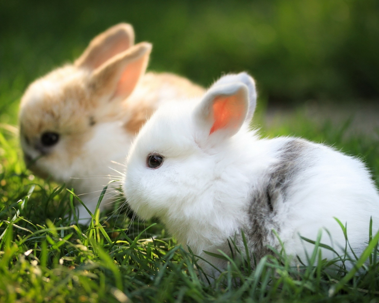 Funny and cute rabbits 05