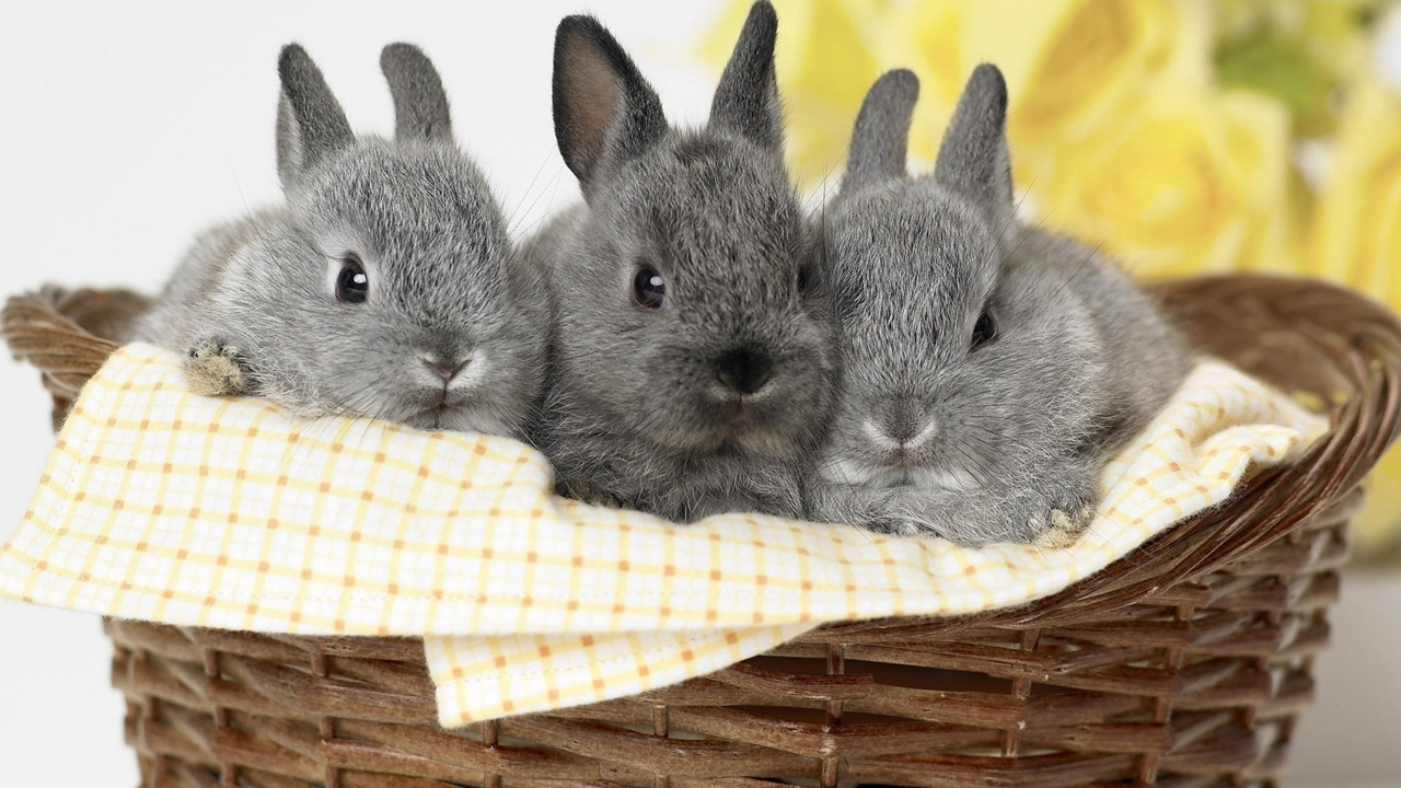 Funny and cute rabbits 08