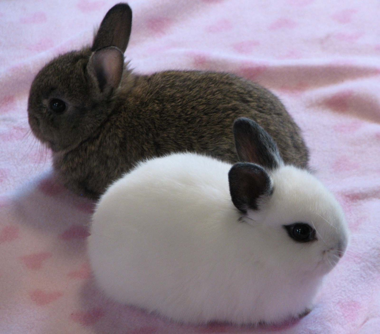 Funny and cute rabbits 10