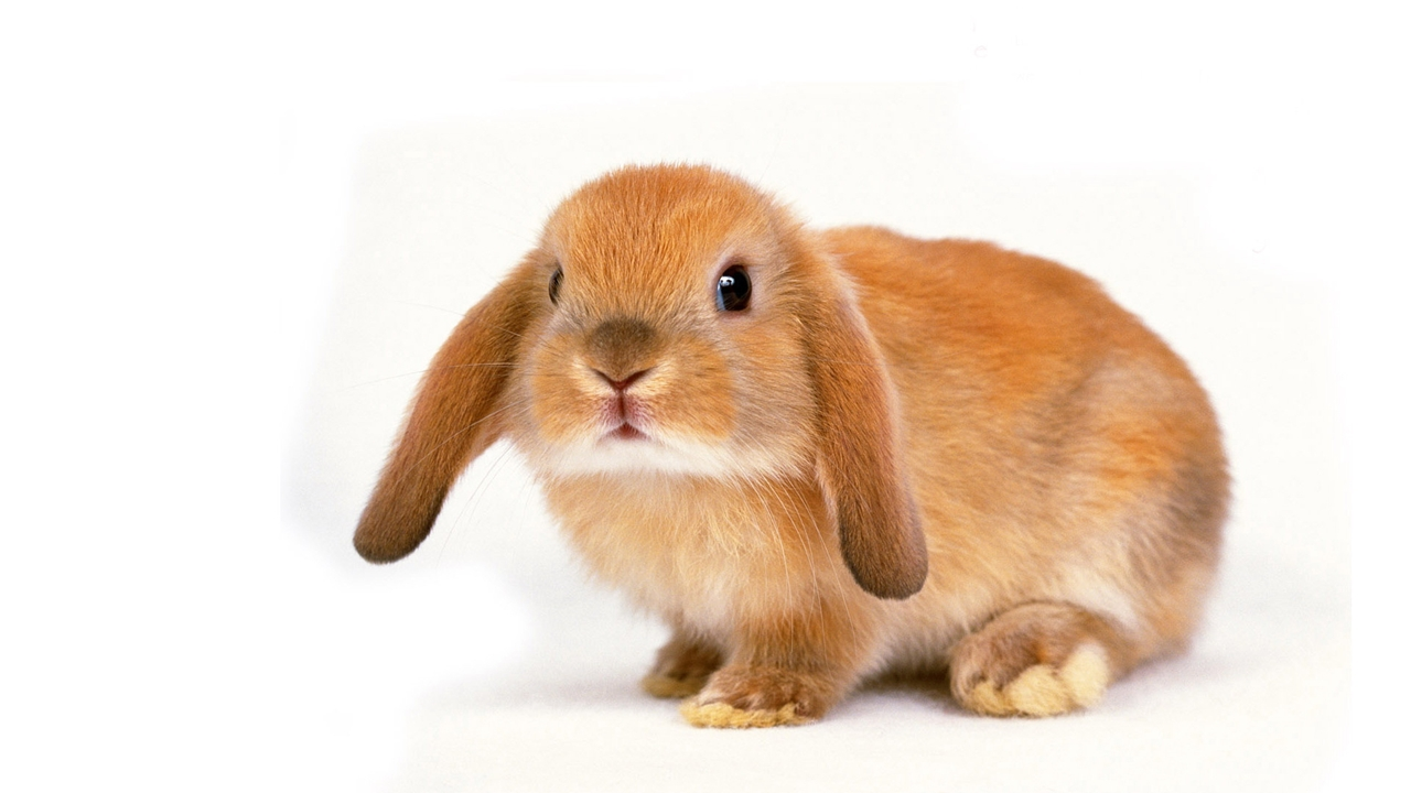 Funny and cute rabbits 12