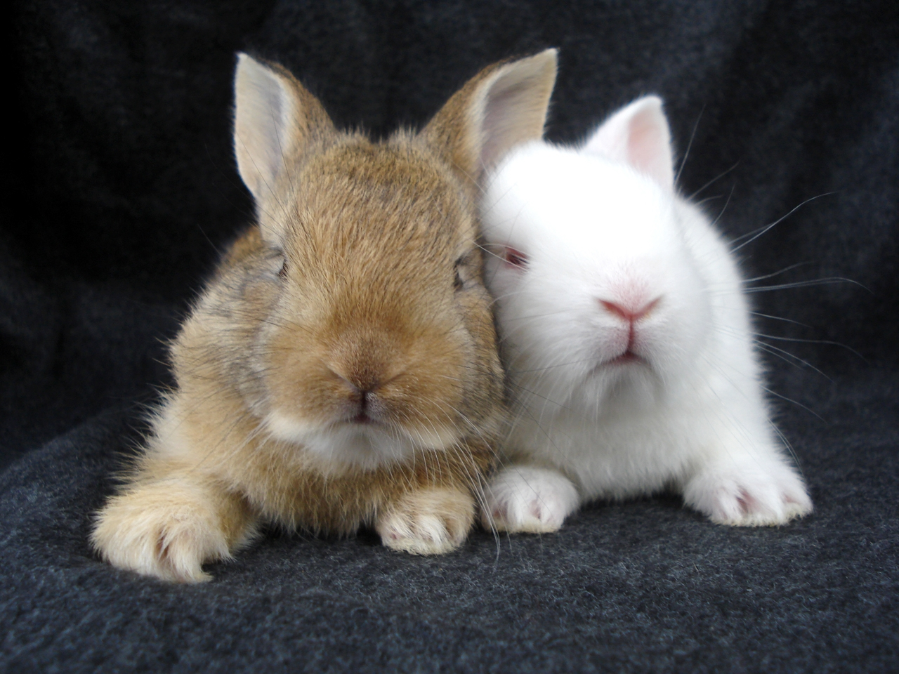 Funny and cute rabbits 13
