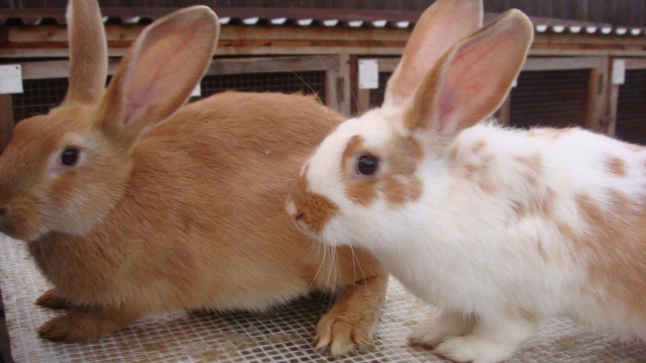 Funny and cute rabbits 19