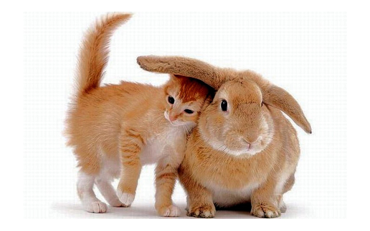 Funny and cute rabbits 23