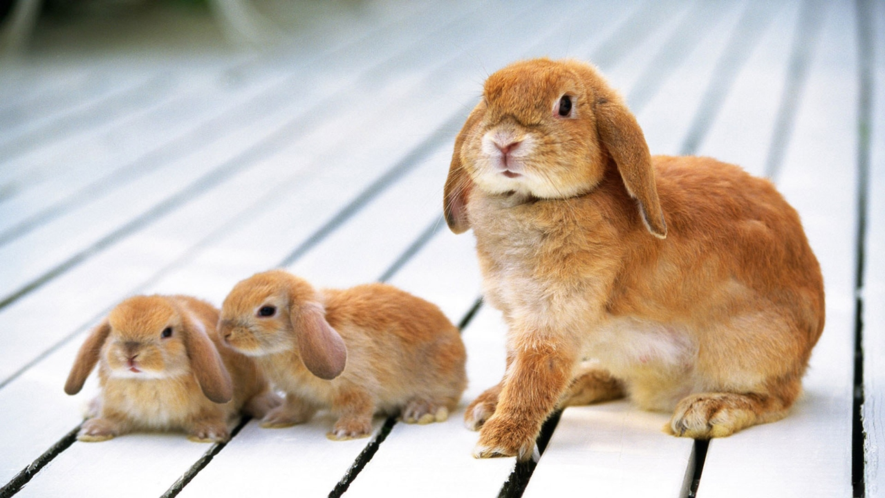 Funny and cute rabbits 25