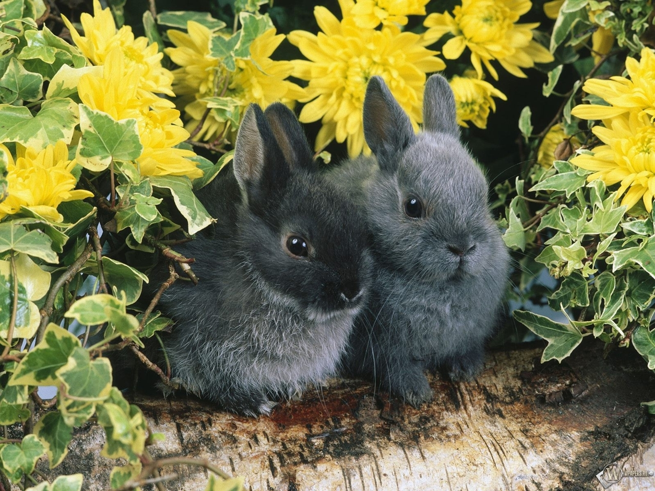 Funny and cute rabbits 29