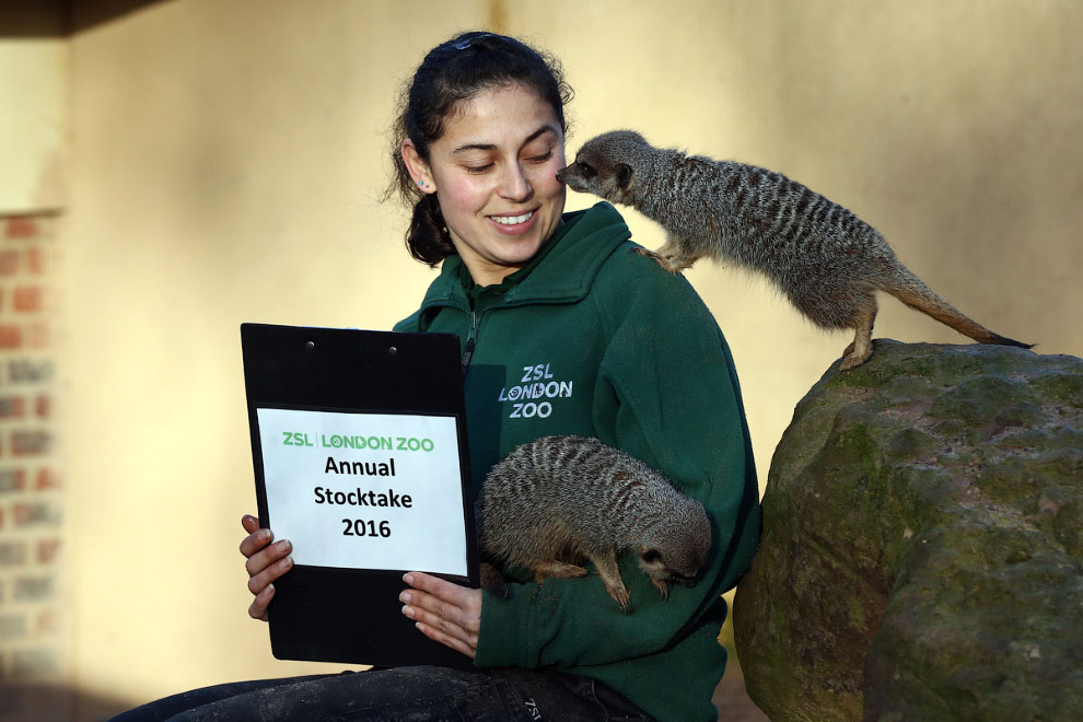 London Zoo Begins annual Animal Census 04