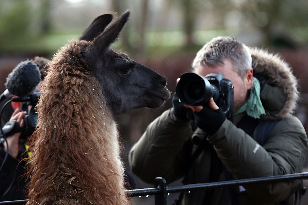 London Zoo Begins annual Animal Census 15