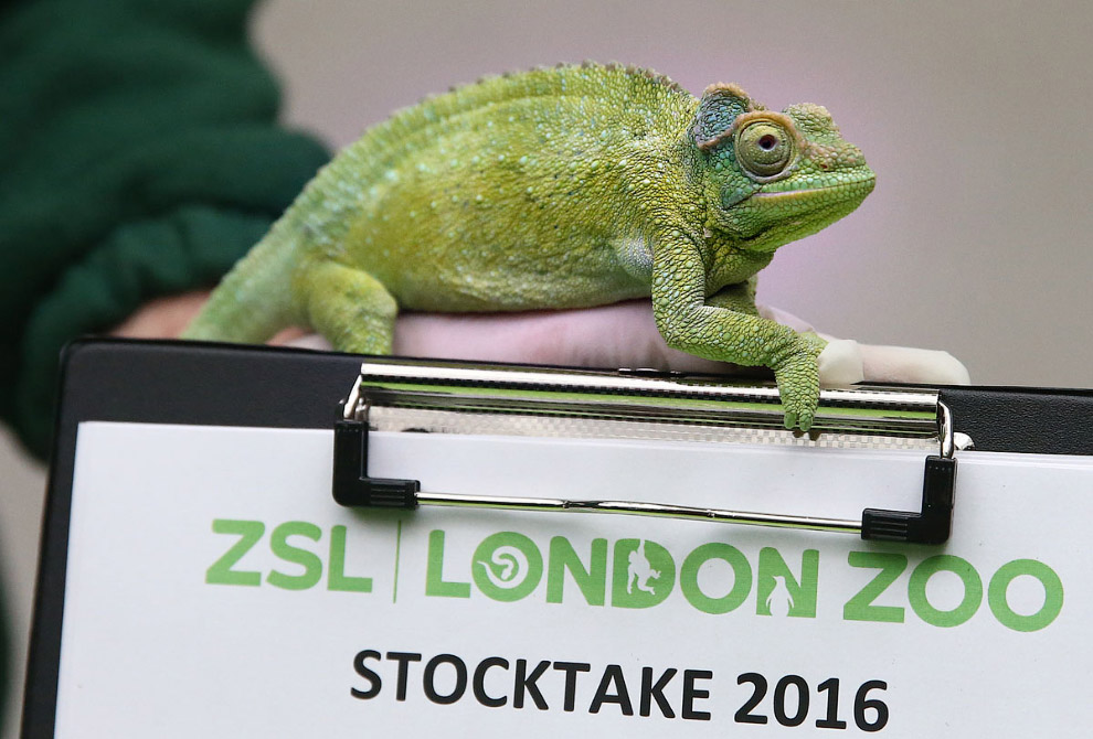 London Zoo Begins annual Animal Census 17
