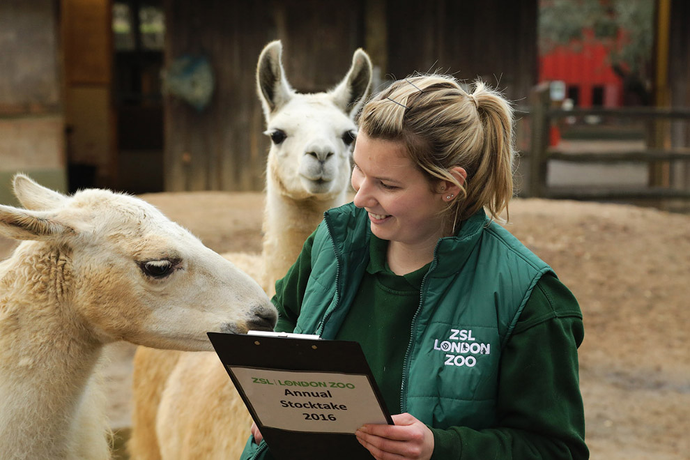 London Zoo Begins annual Animal Census 18