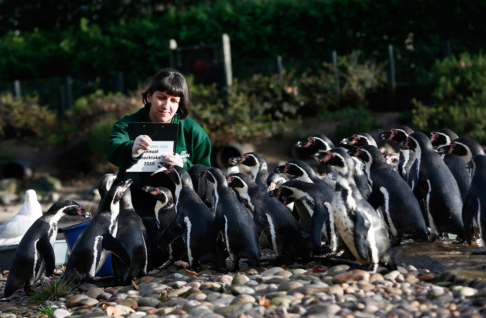 London Zoo Begins annual Animal Census 19