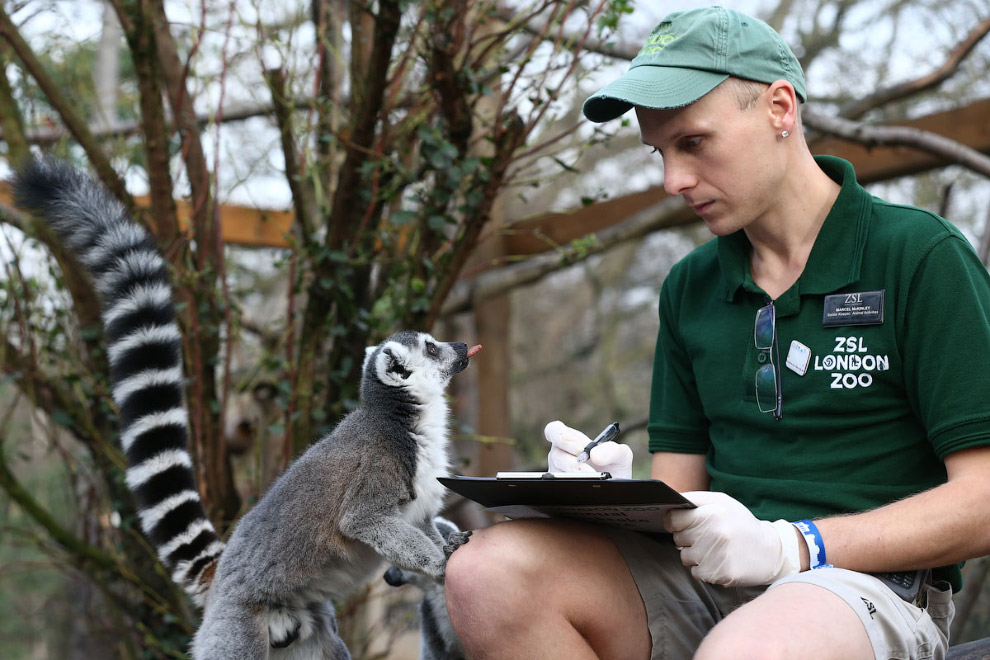London Zoo Begins annual Animal Census 23