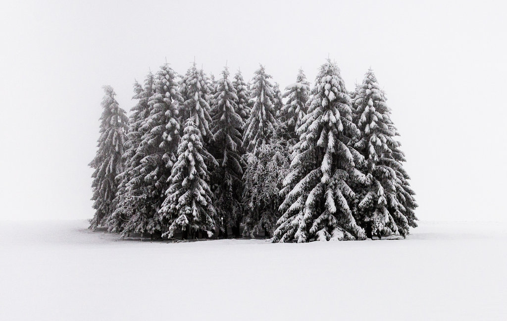Mysterious and fascinating forest photographs by Heiko Gerlicher 01