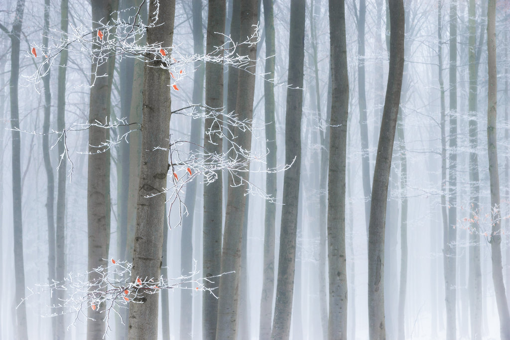Mysterious and fascinating forest photographs by Heiko Gerlicher 02