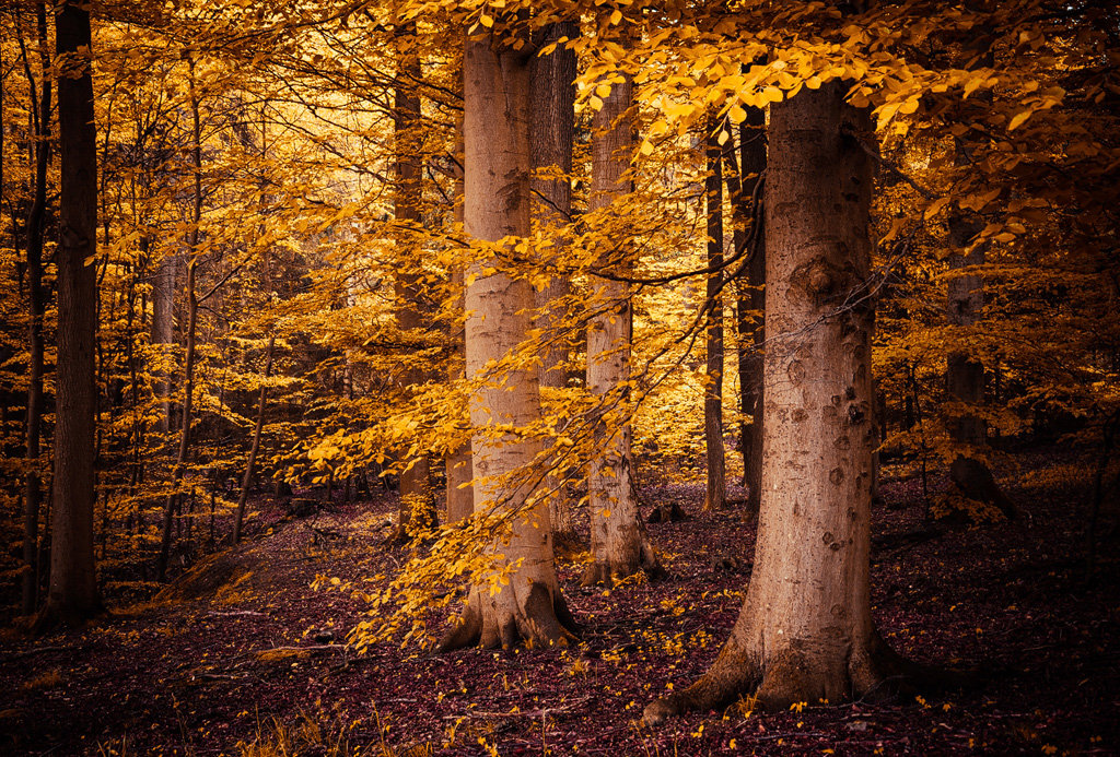 Mysterious and fascinating forest photographs by Heiko Gerlicher 04
