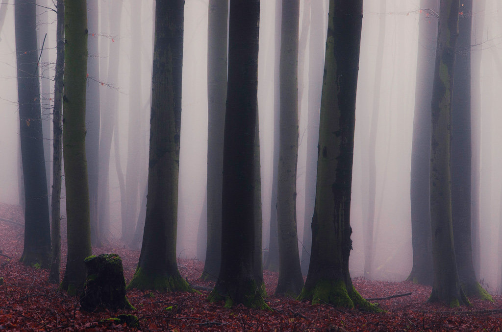 Mysterious and fascinating forest photographs by Heiko Gerlicher 06