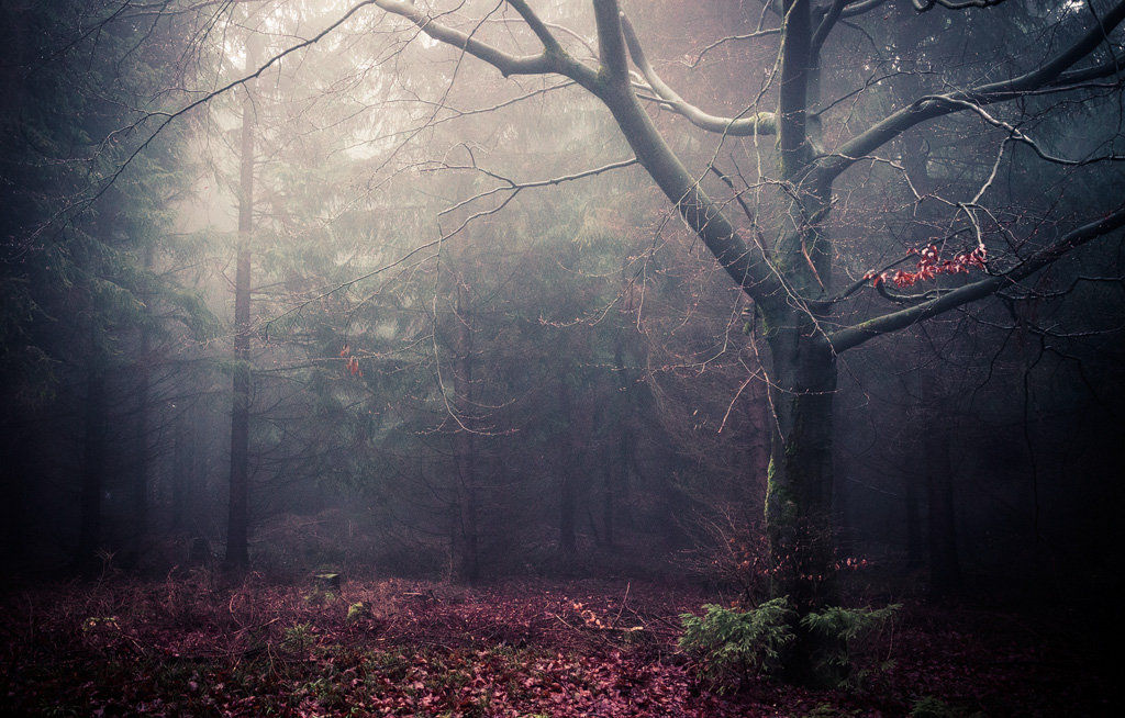 Mysterious and fascinating forest photographs by Heiko Gerlicher 07