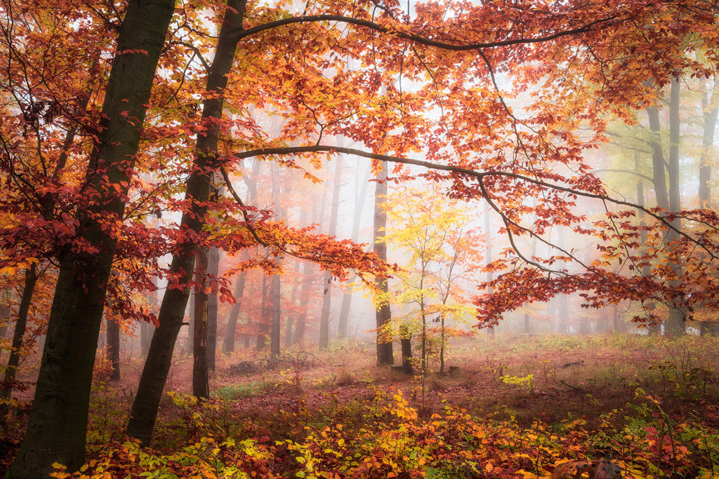 Mysterious and fascinating forest photographs by Heiko Gerlicher 10