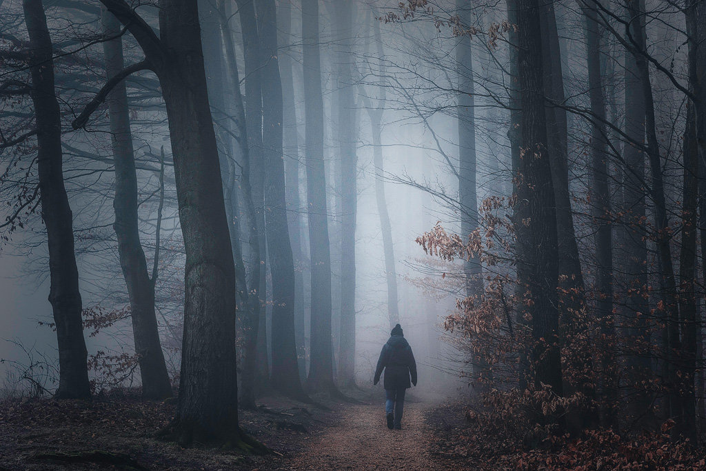 Mysterious and fascinating forest photographs by Heiko Gerlicher 18