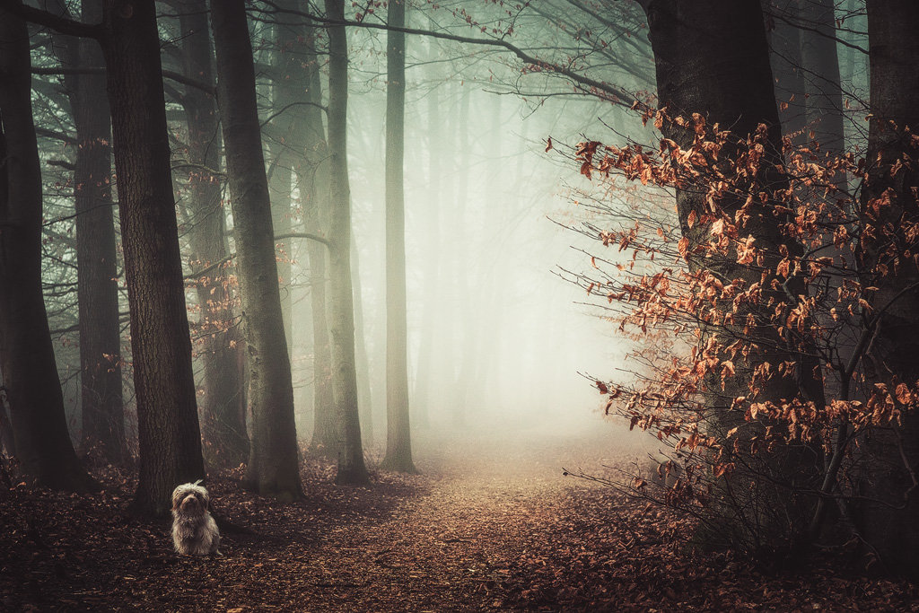 Mysterious and fascinating forest photographs by Heiko Gerlicher 19