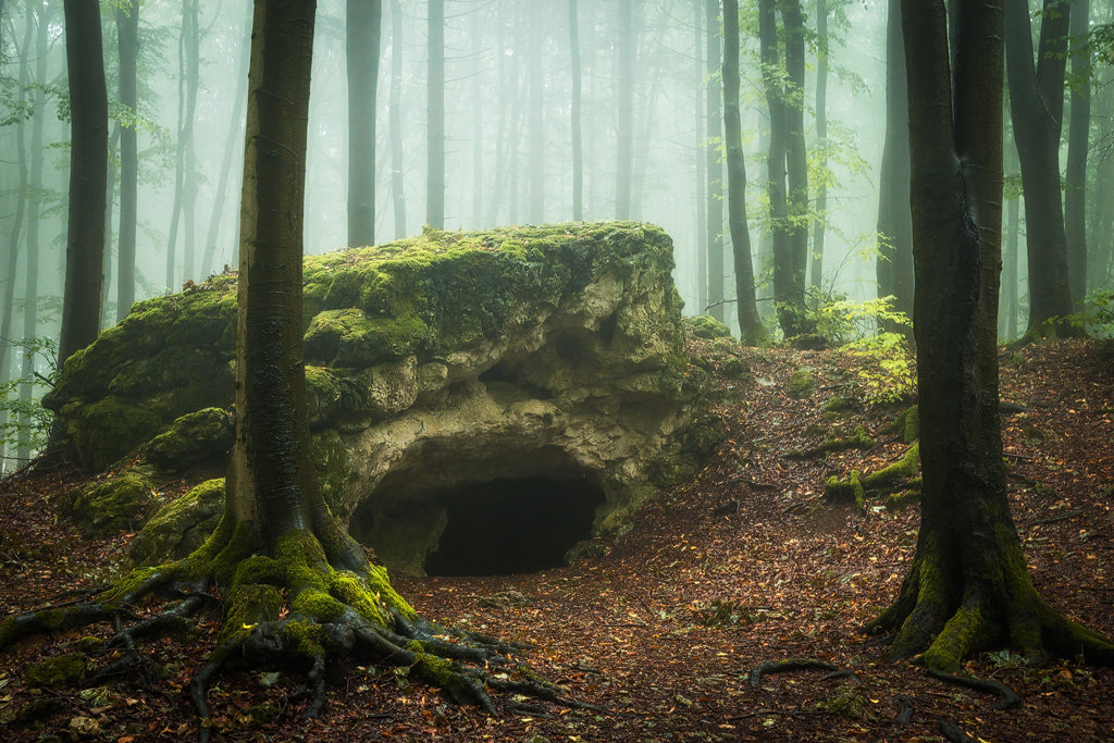 Mysterious and fascinating forest photographs by Heiko Gerlicher 22