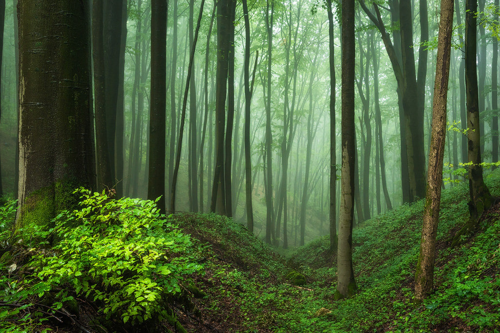 Mysterious and fascinating forest photographs by Heiko Gerlicher 23