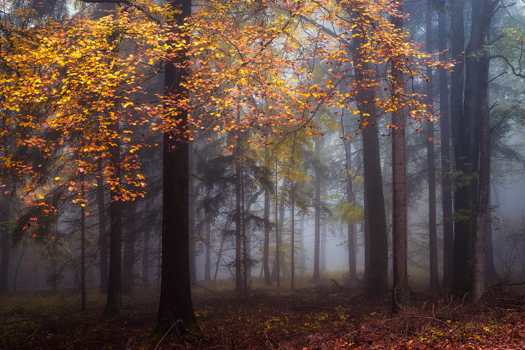 Mysterious and fascinating forest photographs by Heiko Gerlicher 26