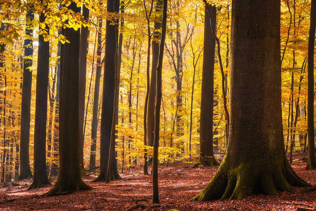Mysterious and fascinating forest photographs by Heiko Gerlicher 27