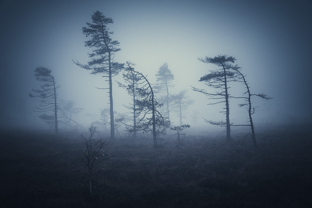 Mysterious and fascinating forest photographs by Heiko Gerlicher 28