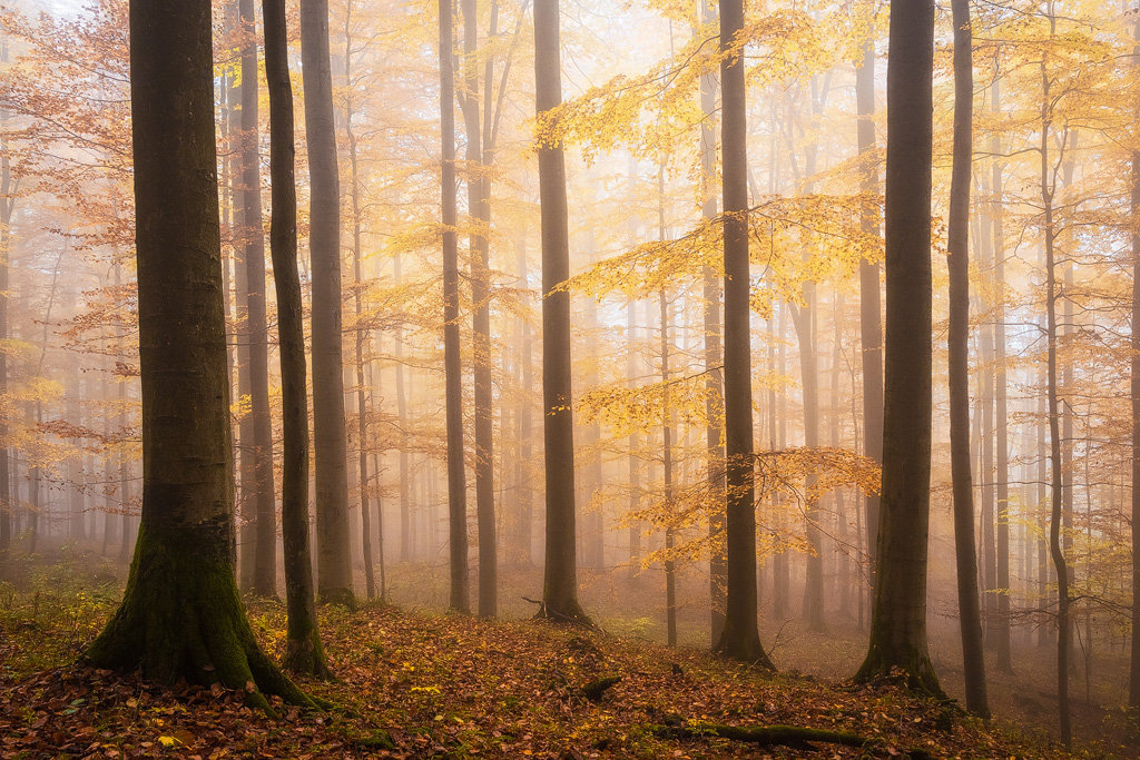 Mysterious and fascinating forest photographs by Heiko Gerlicher 30