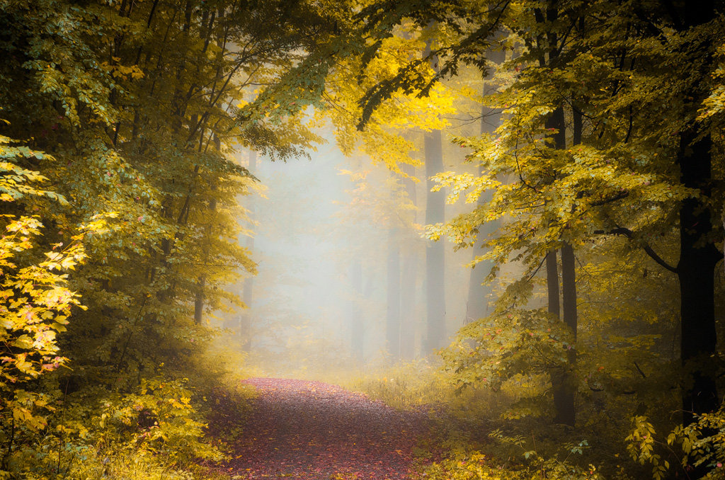 Mysterious and fascinating forest photographs by Heiko Gerlicher 34