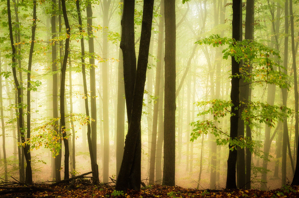 Mysterious and fascinating forest photographs by Heiko Gerlicher 35