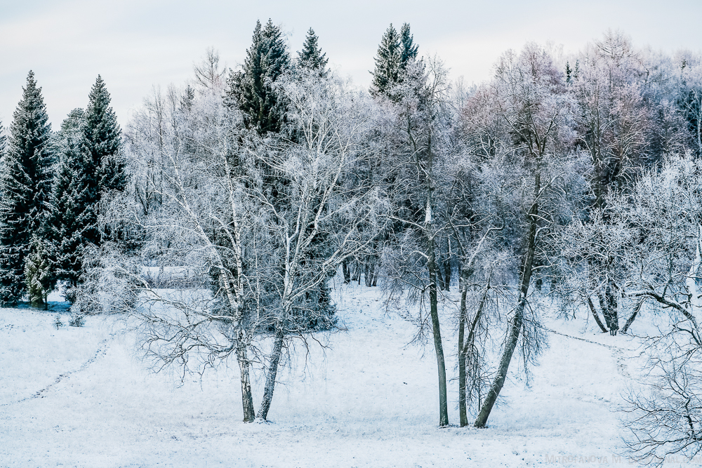 Pavlovsk Park 06