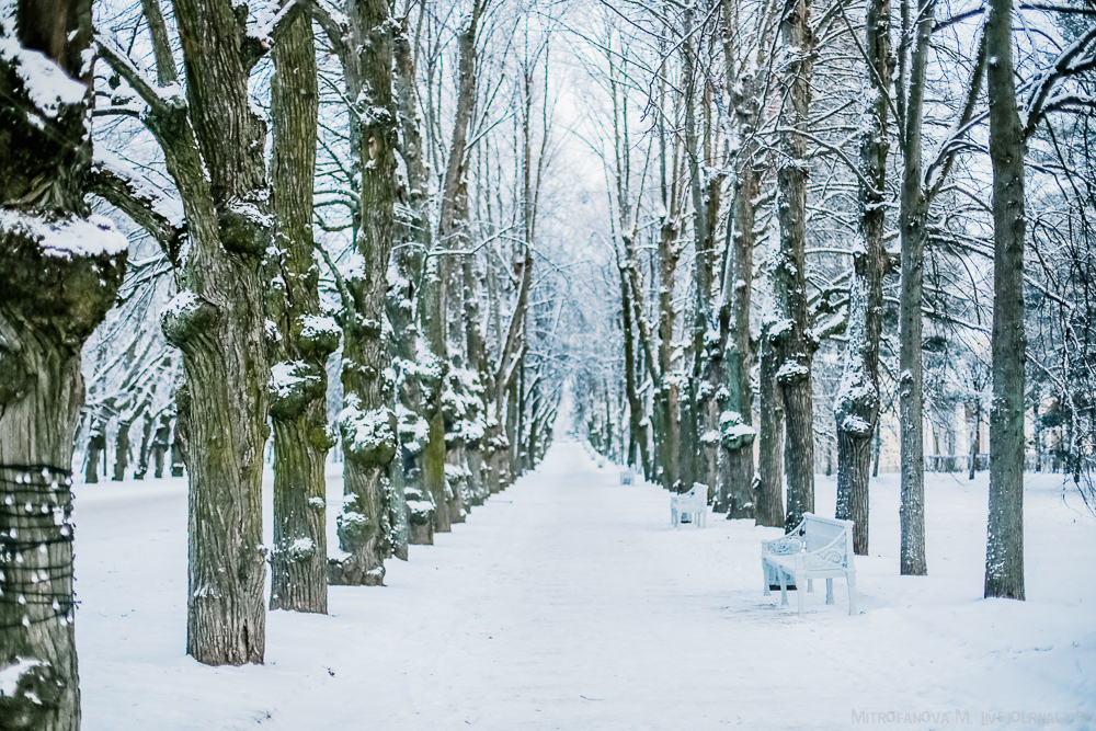 Pavlovsk Park 13