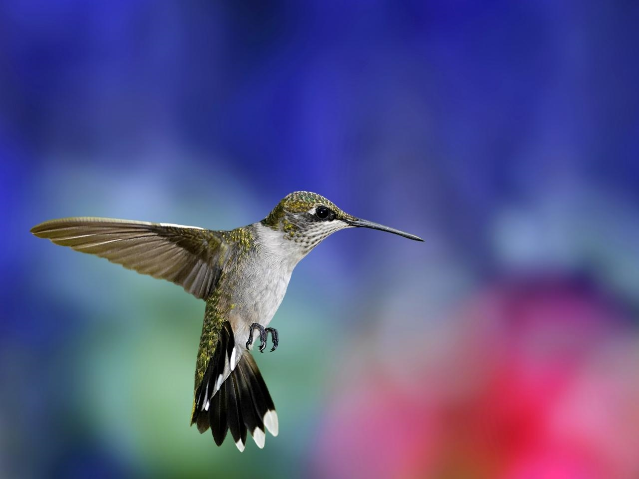 Photos of Hummingbird 04