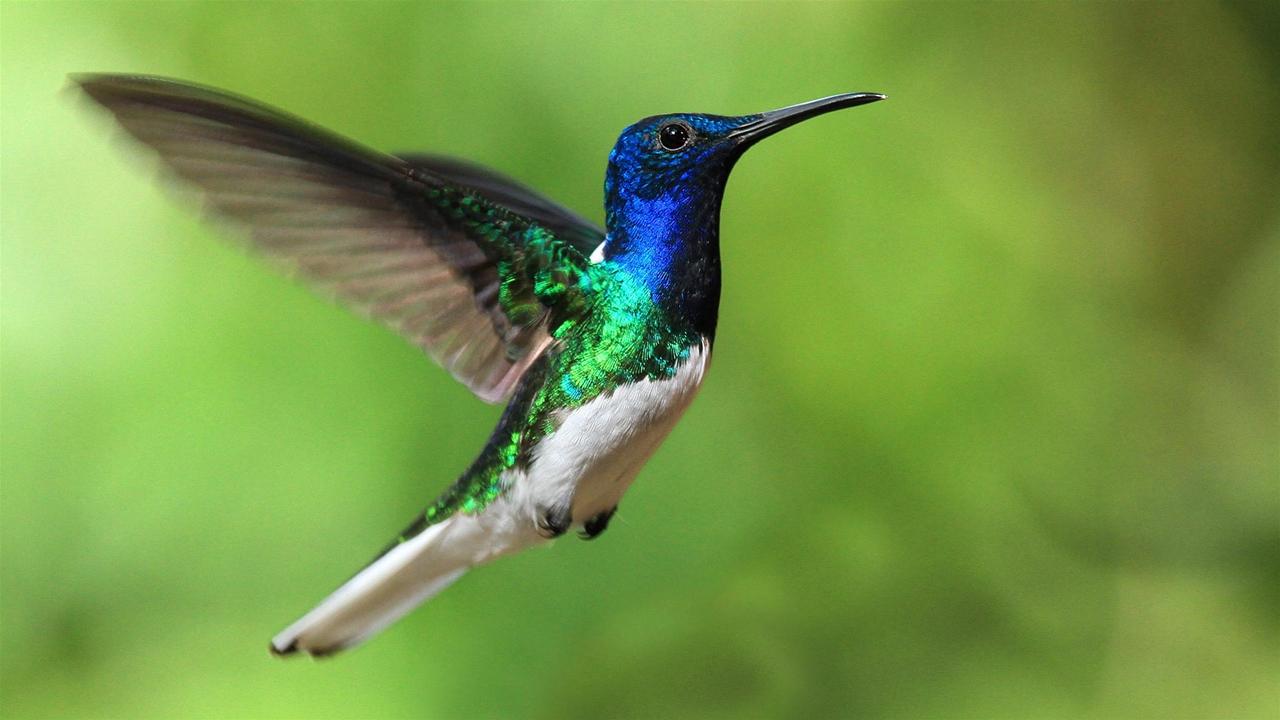Photos of Hummingbird 19