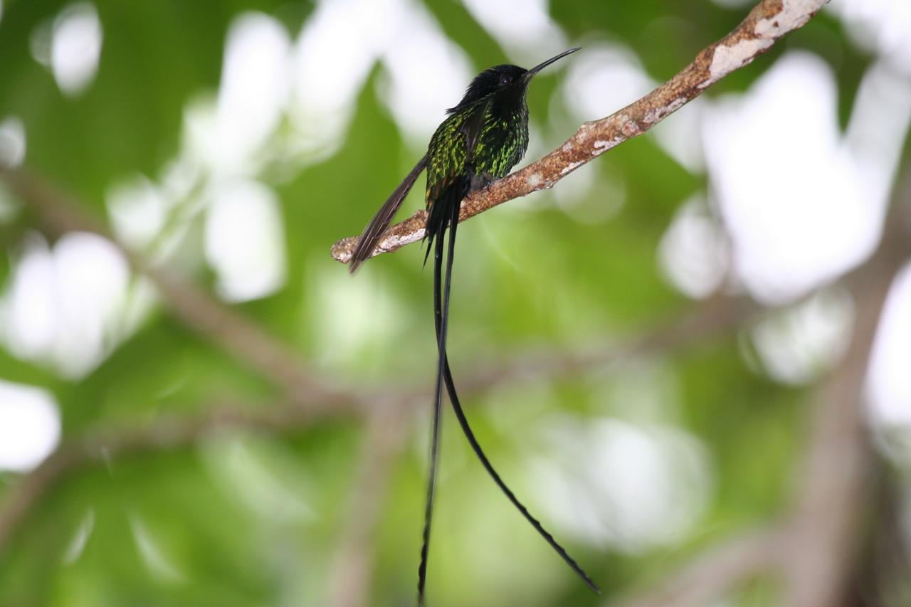 Photos of Hummingbird 27