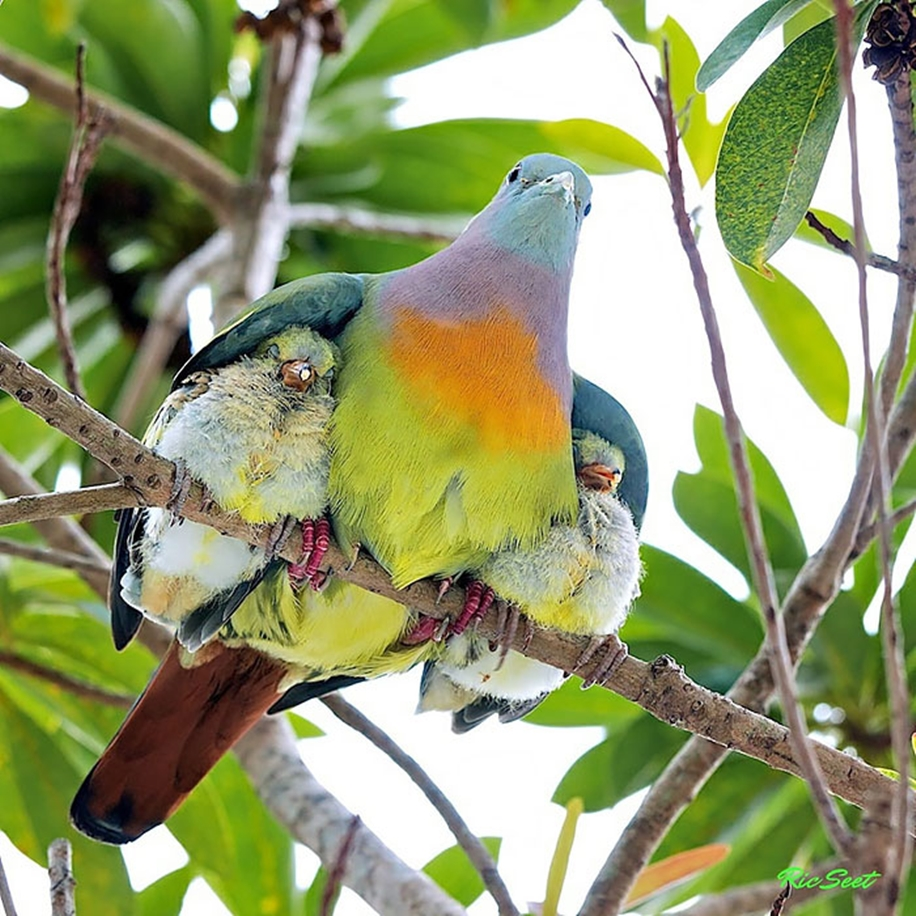 Pictures of birds who care about their kids 03