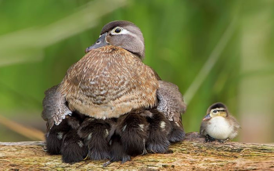 Pictures of birds who care about their kids 13
