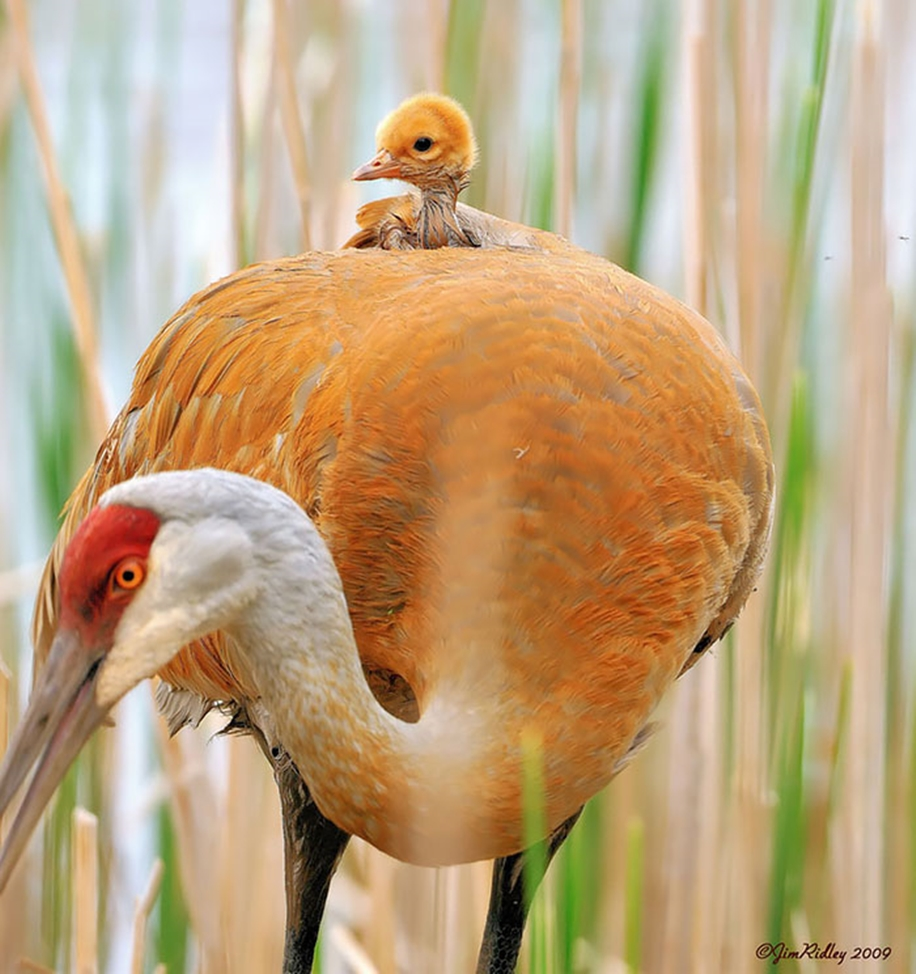 Pictures of birds who care about their kids 15