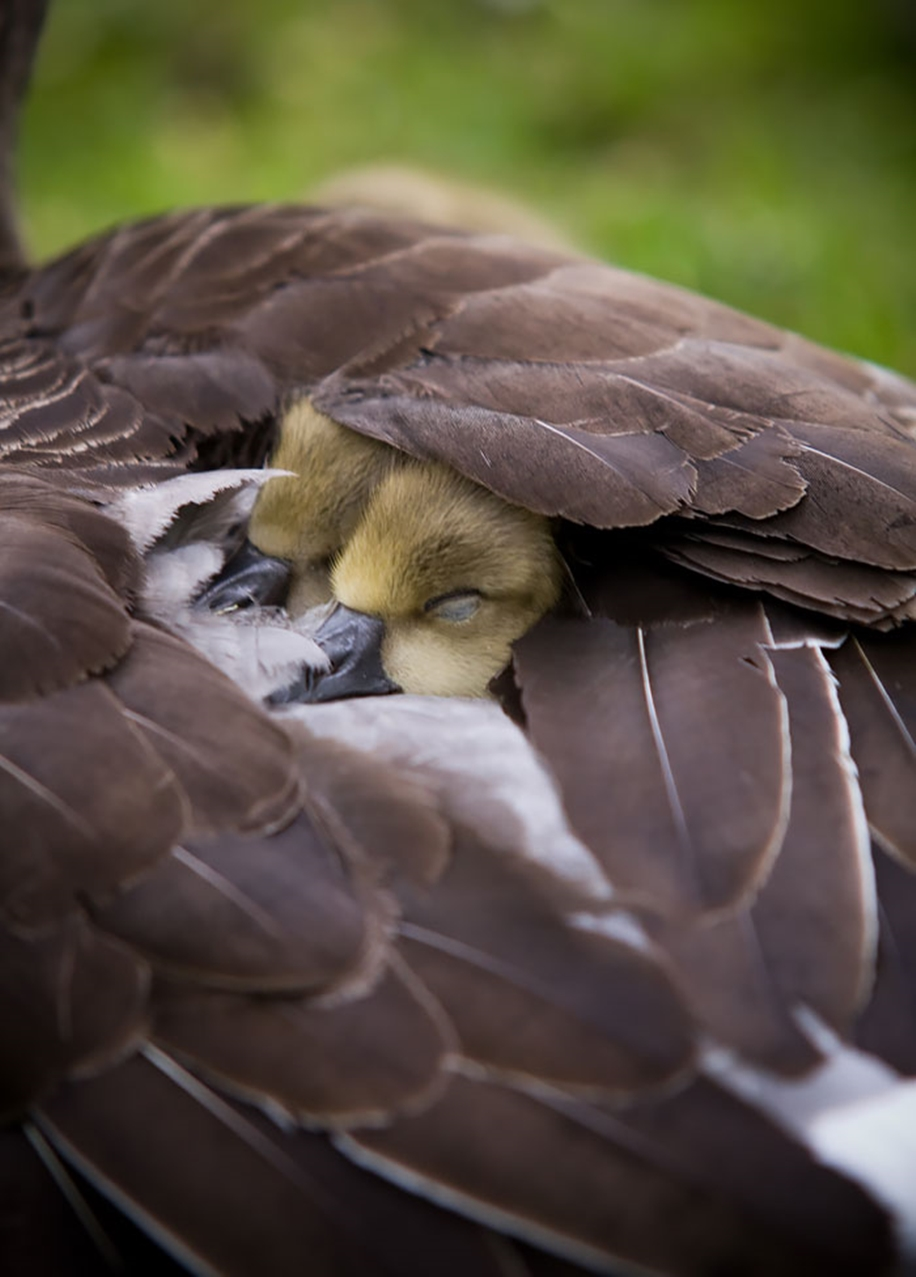 Pictures of birds who care about their kids 18