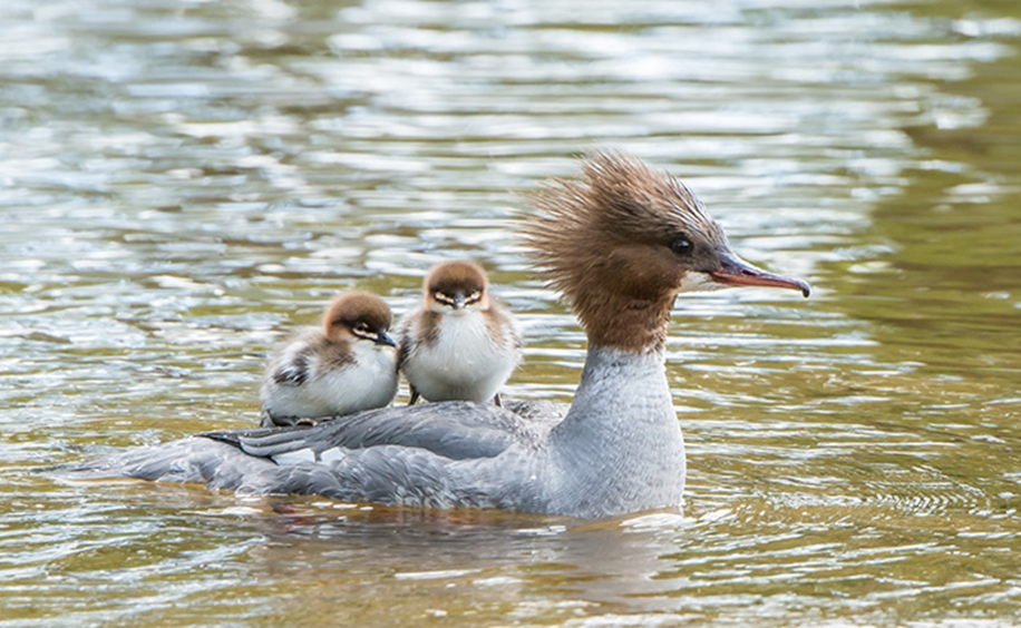Pictures of birds who care about their kids 38
