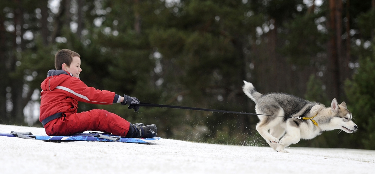Sled dog race in Aviemore 06