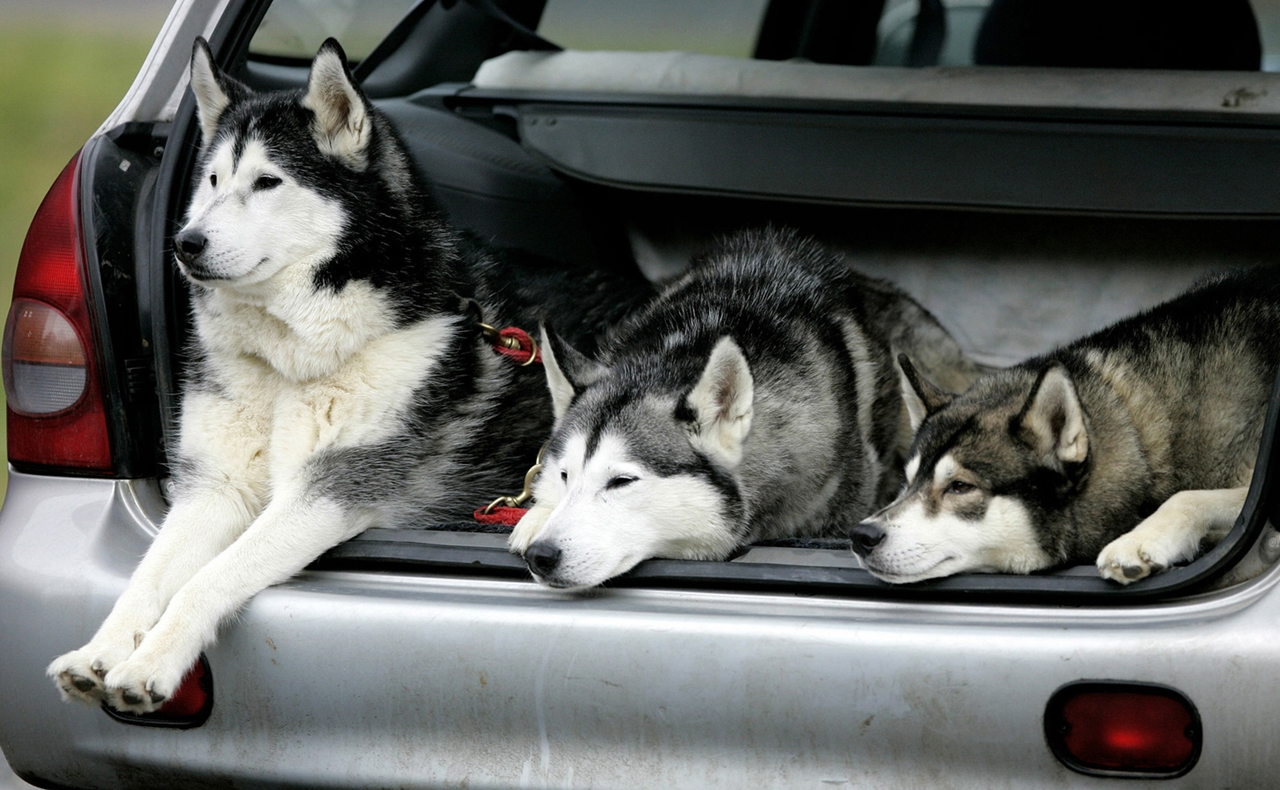 Sled dog race in Aviemore 07