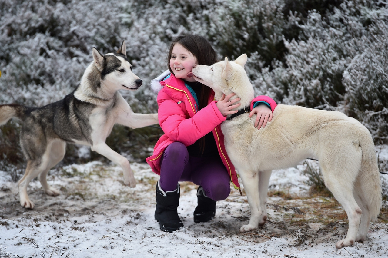 Sled dog race in Aviemore 08