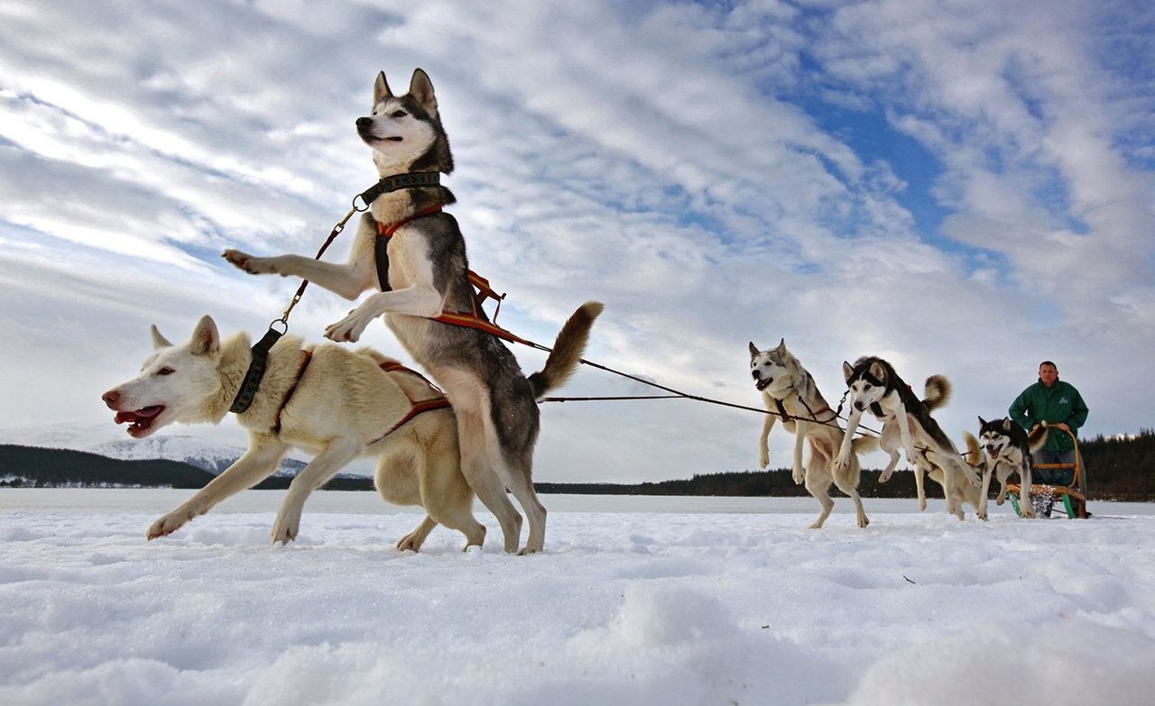 Sled dog race in Aviemore 14