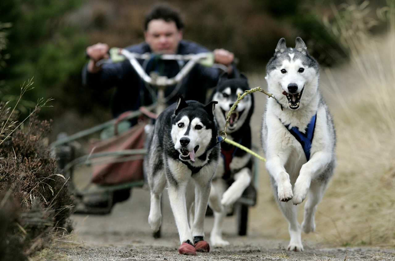 Sled dog race in Aviemore 18