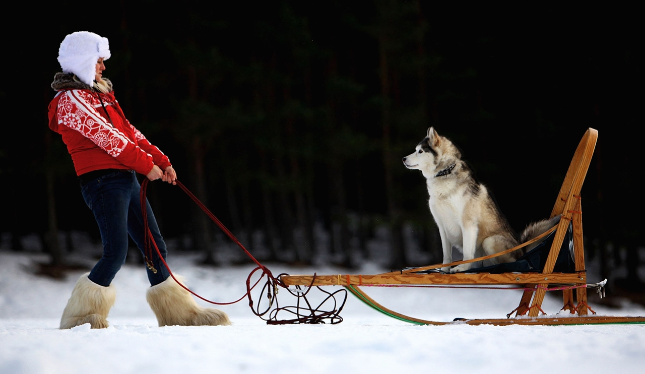 Sled dog race in Aviemore 20