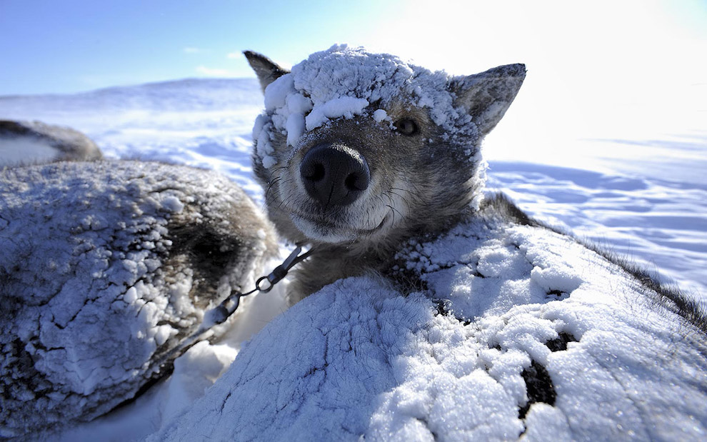 Snow animals 03
