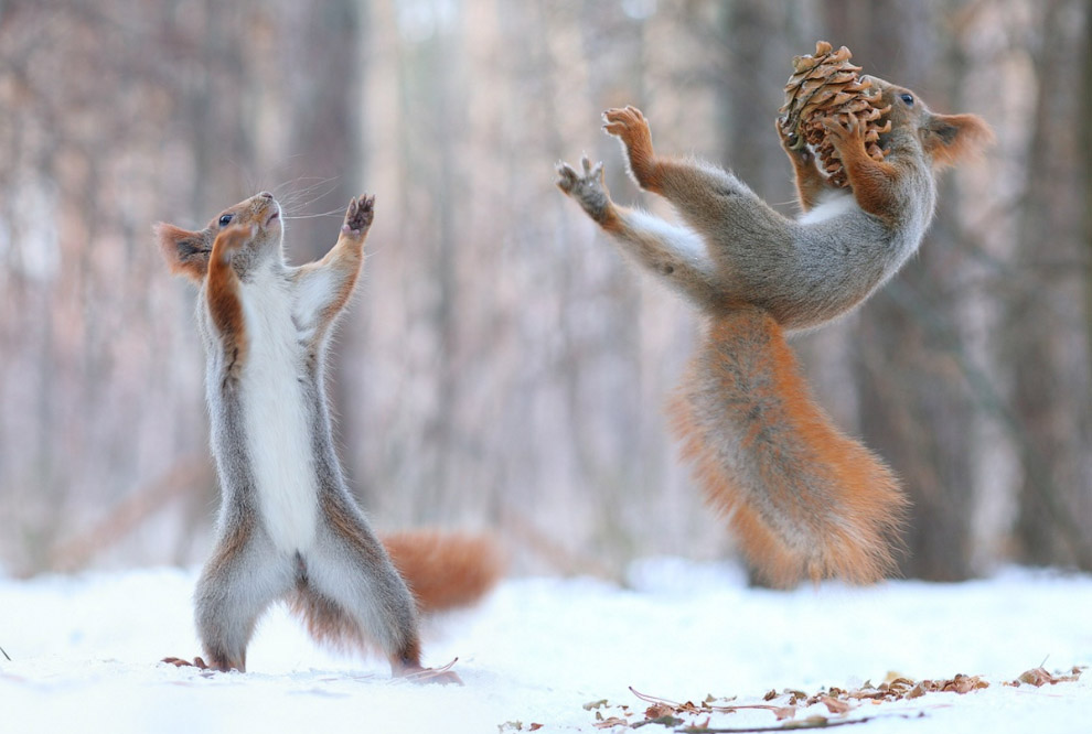 Snow animals 08