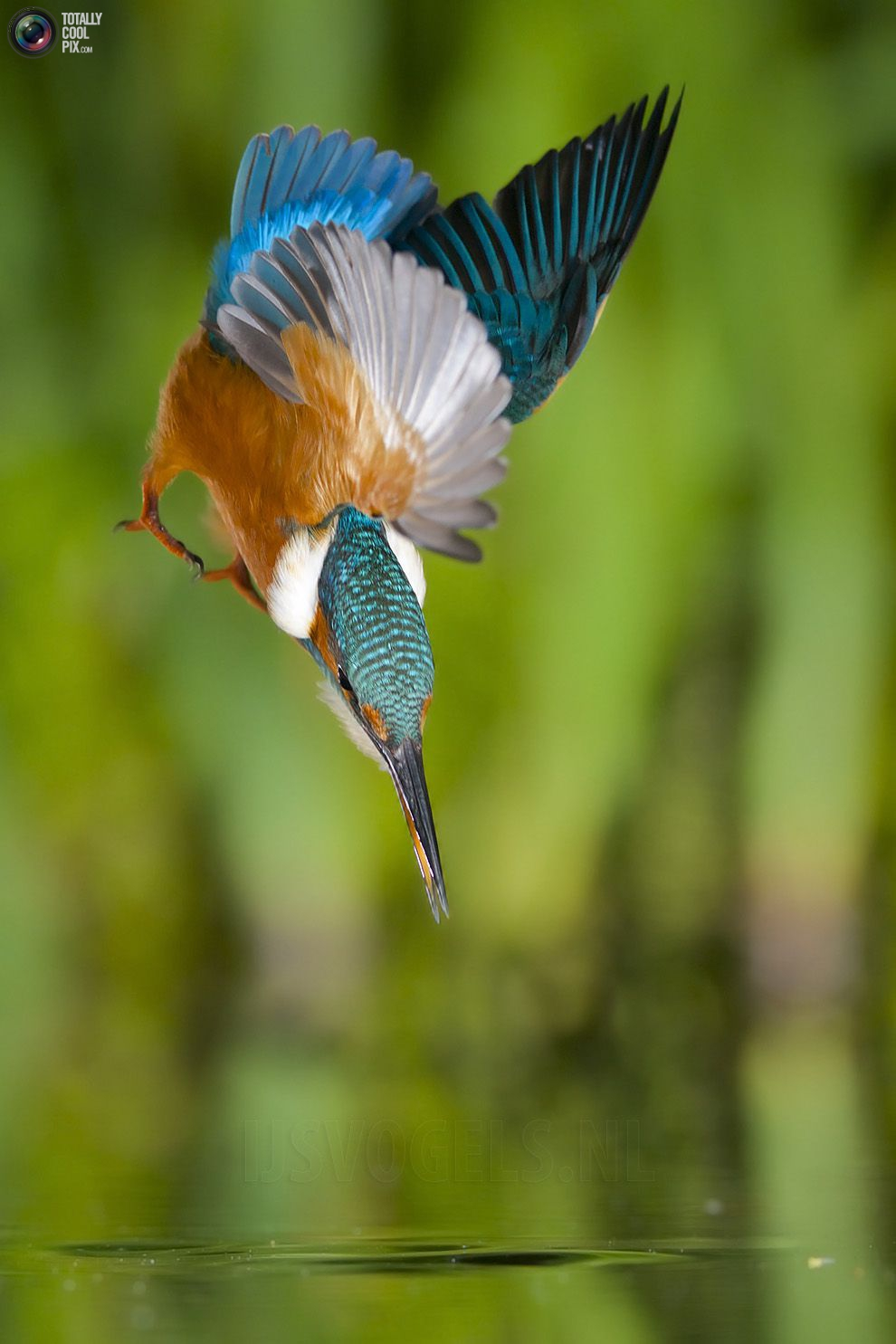 Stunning footage of catching fish by Kingfisher 07
